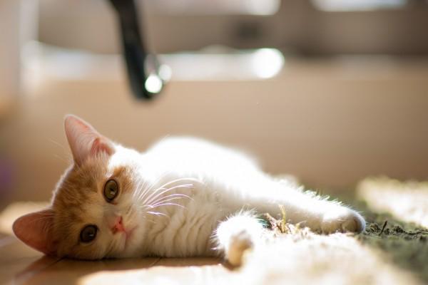 Bonito gato relajado en el suelo