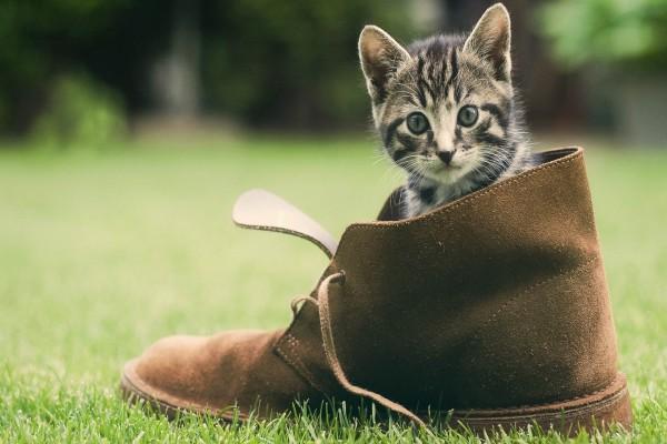 Gatito dentro de una bota