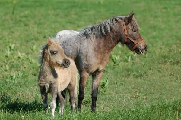Potro y yegua sobre la hierba