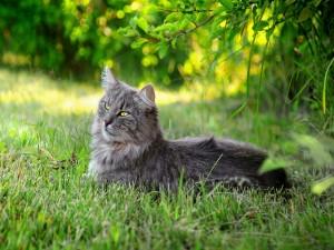 Hermoso gato tumbado en la hierba