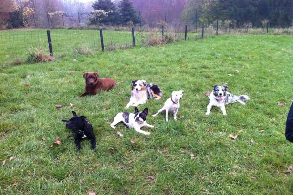 Perros tumbados en la hierba