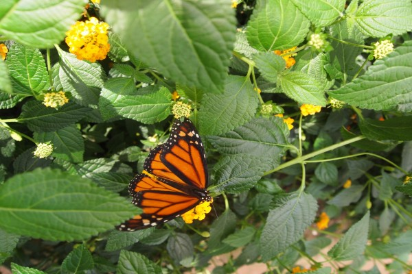 Mariposa naranja en una planta