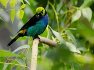 Pájaro con plumas de colores