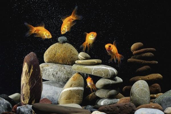 Piedras y peces