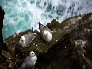 Postal: Gaviotas en una roca