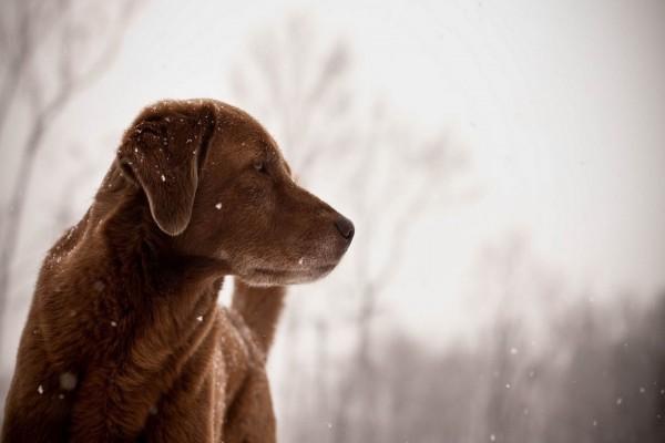 Perro observando los copos de nieve
