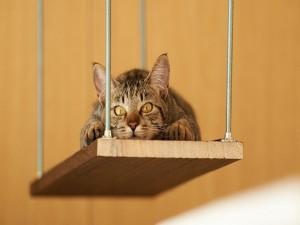 Postal: Gatito asustado en el columpio