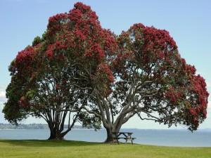 Postal: Mesa de madera bajo dos grandes árboles