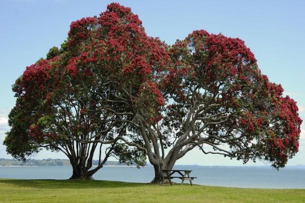 Mesa de madera bajo dos grandes árboles