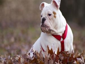Perro perezoso sentado sobre las hojas