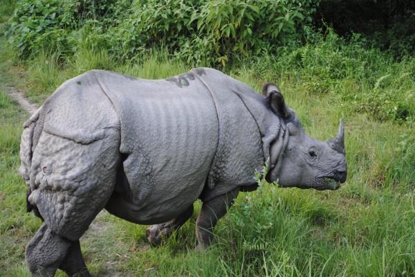 La curtida piel de un rinoceronte