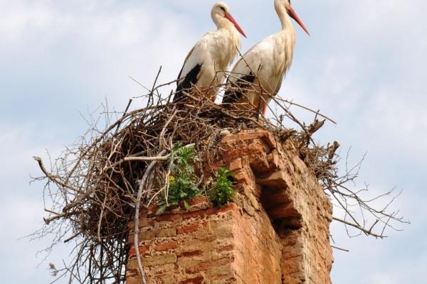 Cigüeñas en el nido