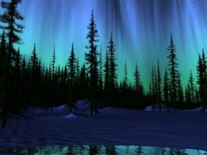 Postal: Aurora boreal sobre un bosque de pinos nevado