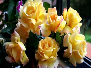 Postal: Esbeltas rosas amarillas