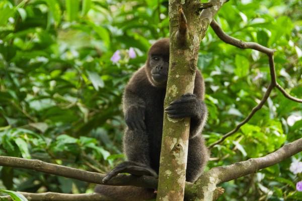 Hermoso mono sobre un árbol
