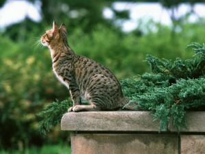 Gato sentado en un muro