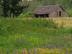 Cobertizo de madera en el campo