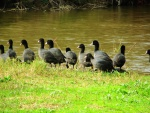 Grupo de aves junto al agua