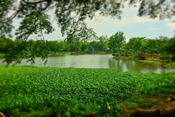 Un lago rodeado de naturaleza