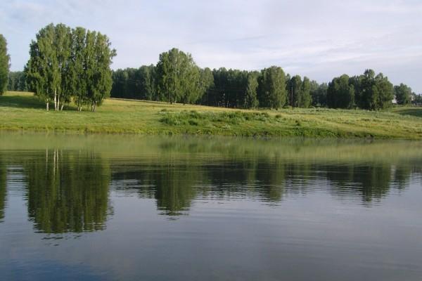 Orilla verde de un río