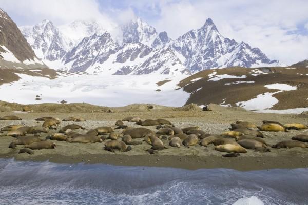 Leones marinos en la orilla