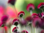Tallos de flores fucsias