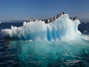Colonia de pingüinos en un iceberg