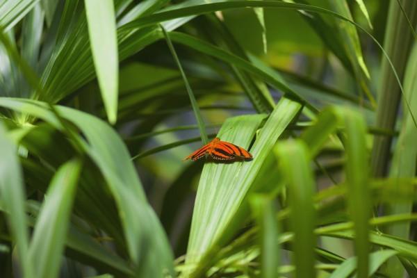 Mariposa naranja y negra sobre una hoja