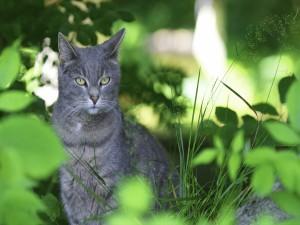 Postal: Gato gris entre las plantas