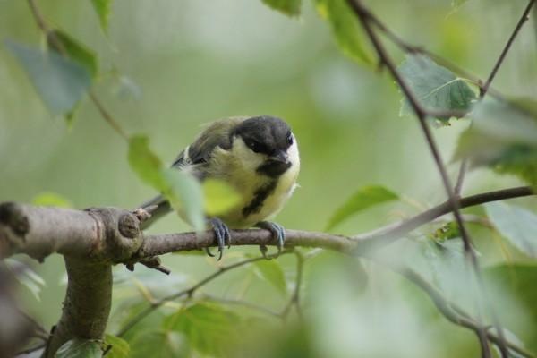 Pájaro quieto en una rama
