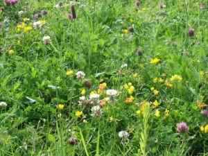 Flores silvestres de varios colores