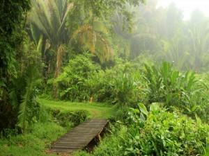 Postal: Plantas y palmeras en un entorno húmedo
