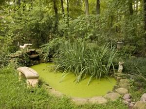 Estanque verde en un jardín