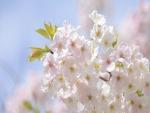 Una rama con hermosas flores blancas
