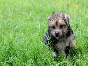 Un cachorrito sobre la hierba