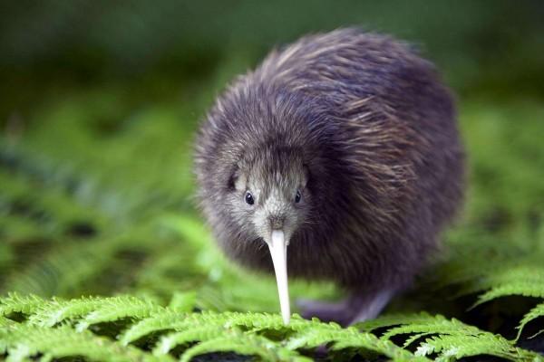 Kiwi sobre unas hojas verdes