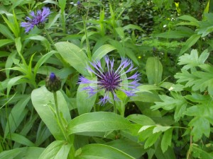 Bonitas flores silvestres de color lila