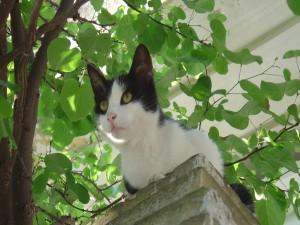 Gato blanco y negro sobre un muro