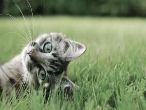Postal: Un simpático gato en la hierba