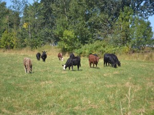 Vacas pastando en un soleado prado