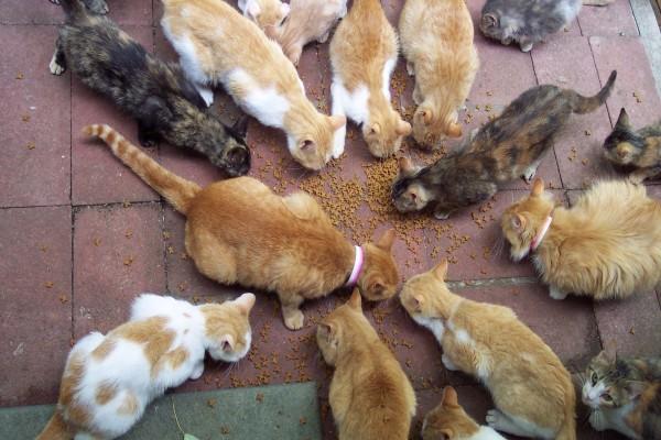 Gatos almorzando