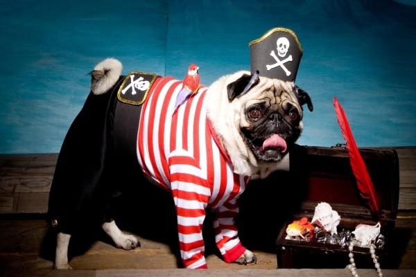 Perrito con traje de pirata
