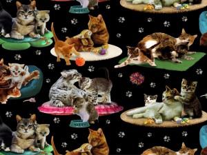 Gatos en sus alfombras
