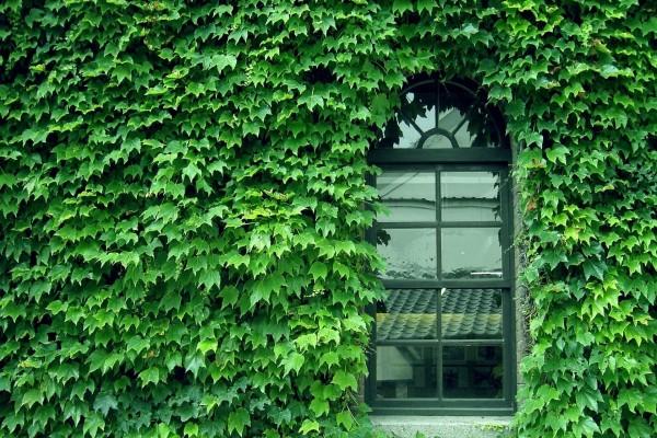 Ventana rodeada de hojas