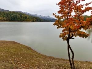 Postal: Árbol otoñal junto al lago