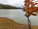 Árbol otoñal junto al lago