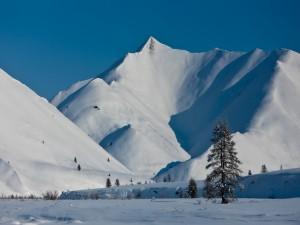 Postal: Invierno blanco