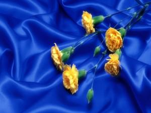 Postal: Claveles amarillos sobre una tela azul