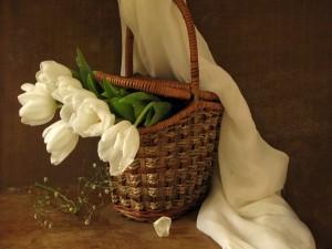 Cesta con tulipanes blancos