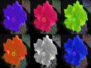 Postal: Flores de hibisco en seis colores